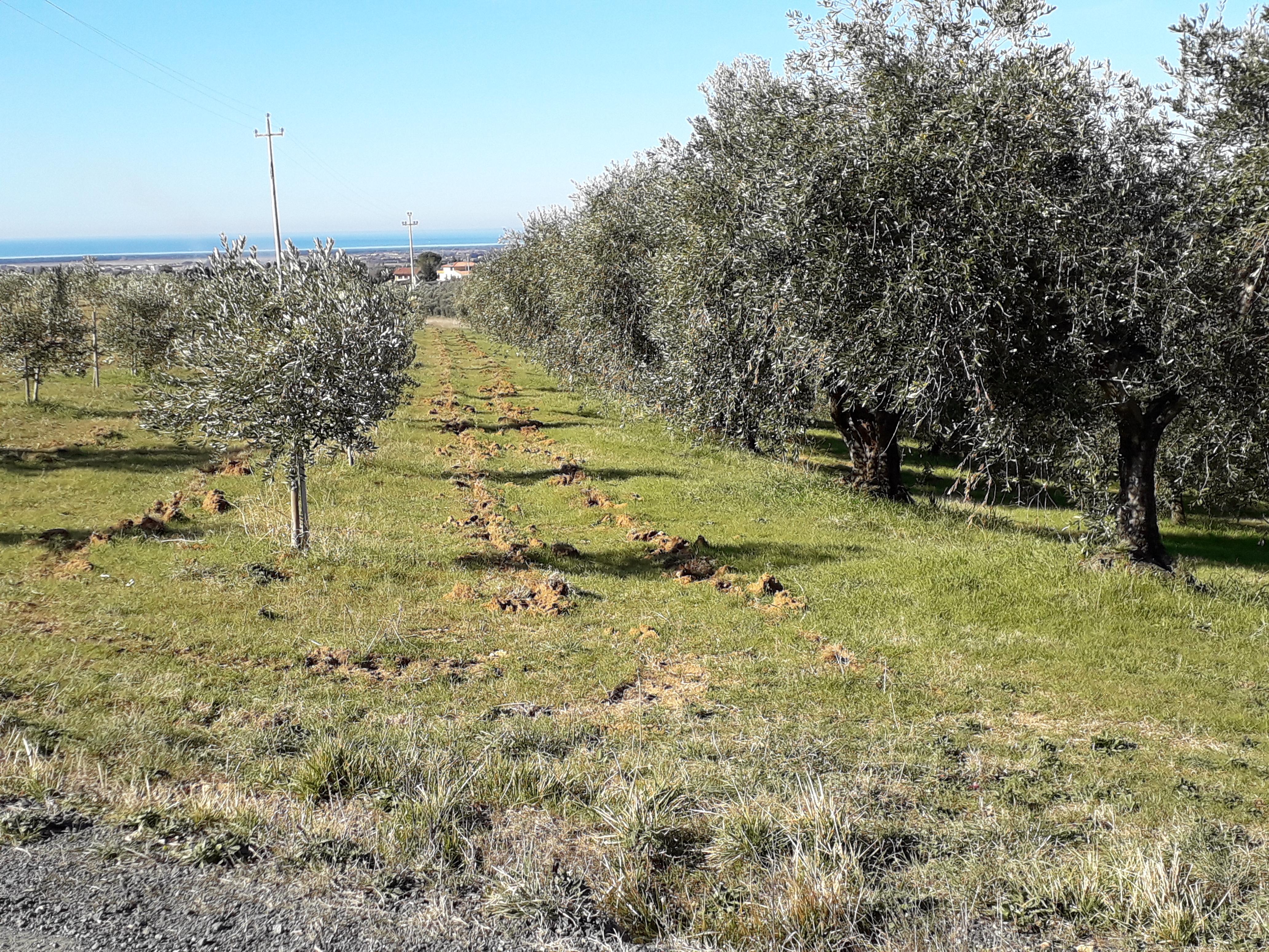 Podere Fornelli, Casale Marittimo, Toscana - Vendita Olio e prodotti naturali