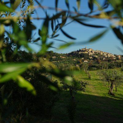 Casale Marittimo visto dall'oliveta del Podere Fornelli - Olio Extravergine di Oliva, ortaggi di stagione, Toscana