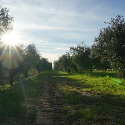 Podere Fornelli - Olio Extravergine di oliva e ortaggi, Casale Marittimo, Toscana