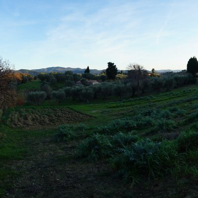 Carciofi, ortaggi - Podere Fornelli, Casale Marittimo, Toscana