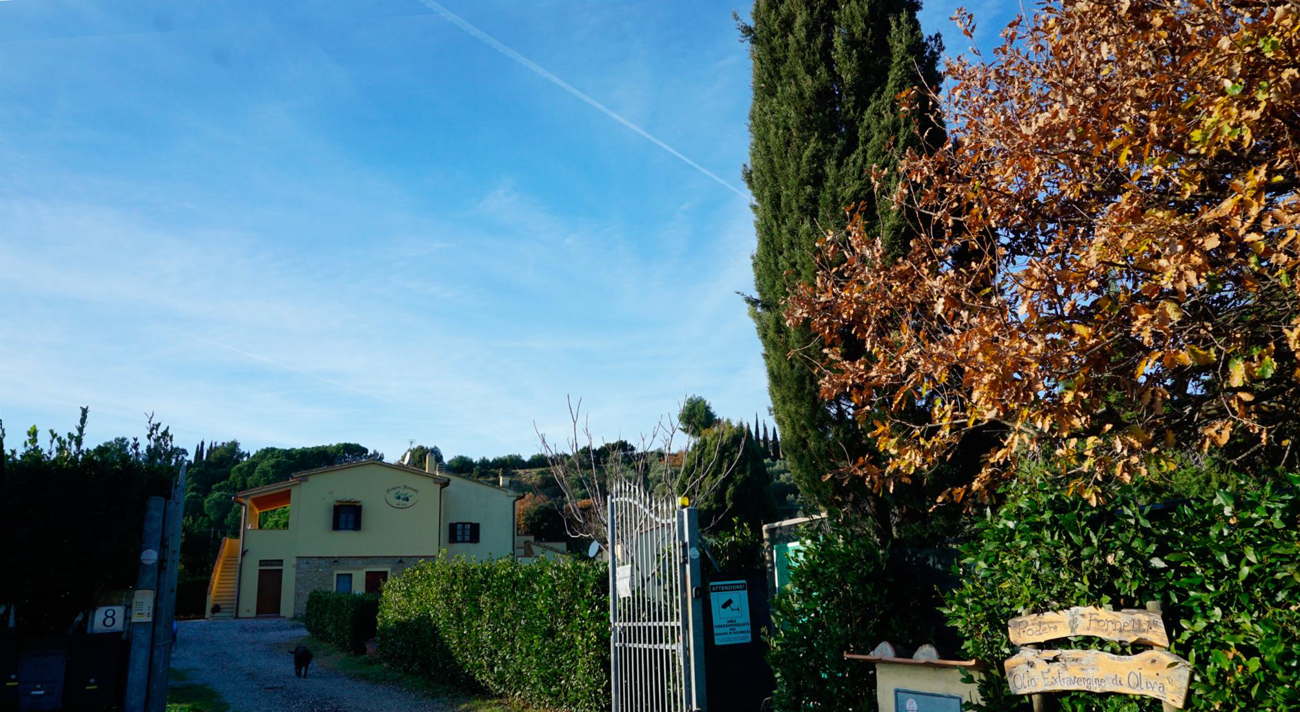 Podere Fornelli, produzione e vendita di olio extravergine di oliva, ortaggi di stagione, Casale Marittimo, Toscana