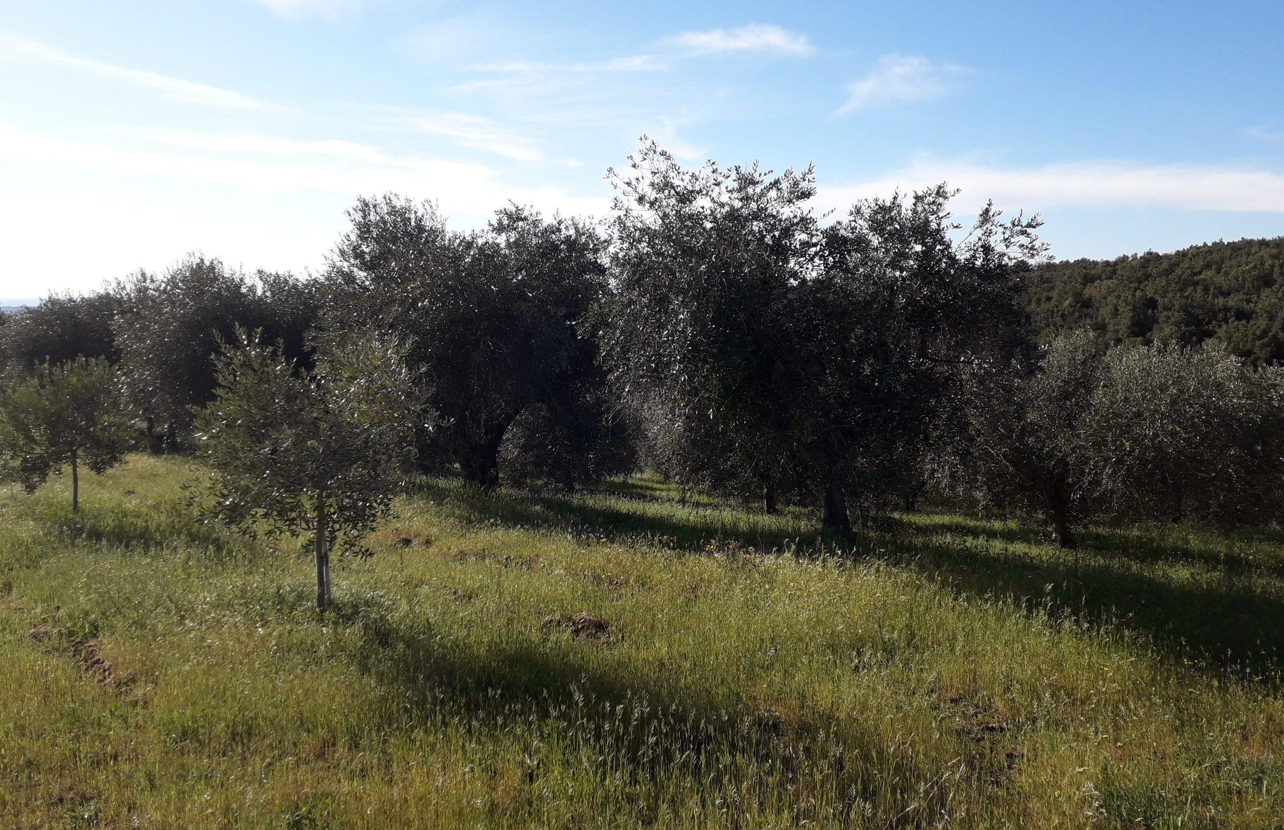 Podere Fornelli, Casale Marittimo, Toscana